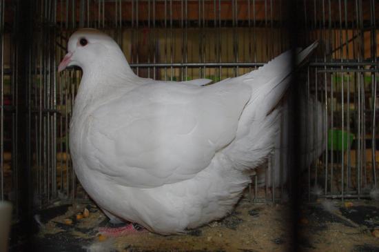 687 - Mondain F - Blanc - PH 95