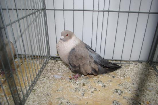 3086 - Swift du Caire M - Gazaganti - 96
