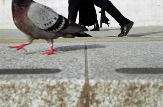 Pigeon de ville 2